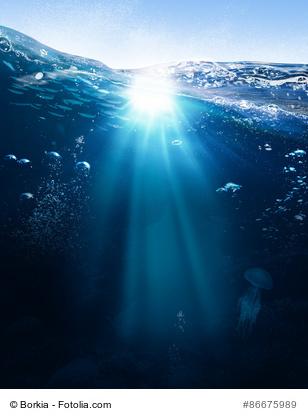 Quallen - die Gefahr unter der Wasseroberfläche
