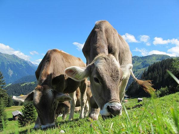 Österreich | Foto: Pixel-Sepp, pixabay.com, Pixabay License